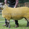 Commercial Sheep Champion at Banchory Show a Gimmer from Miller Farms, The Lurg, Midmar,, Inverurie.