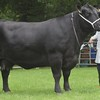 Aberdeen Angus Champion at Banchory Show 16 Bull from Graham Willox Meikle Pitinnan, Oldmeldrum.