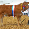 Junior inter-breed beef champion Quaish Lottie from Brymore Academy.