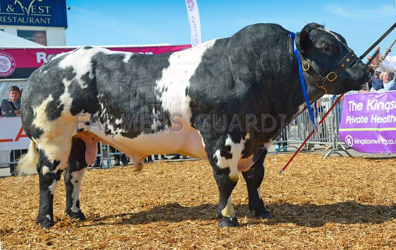 Inter-breed beef champion British Blue bull Cromwell Ironman from Mr E.C. Haste.