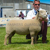 Reserve inter-breed sheep champion a Southdown shearling ewe from J, C and S Long.