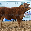 Reserve was Quaish Lucky, a Limousin heifer from Nick, Lisa, Archie and Lottie Hill, Cheddar.