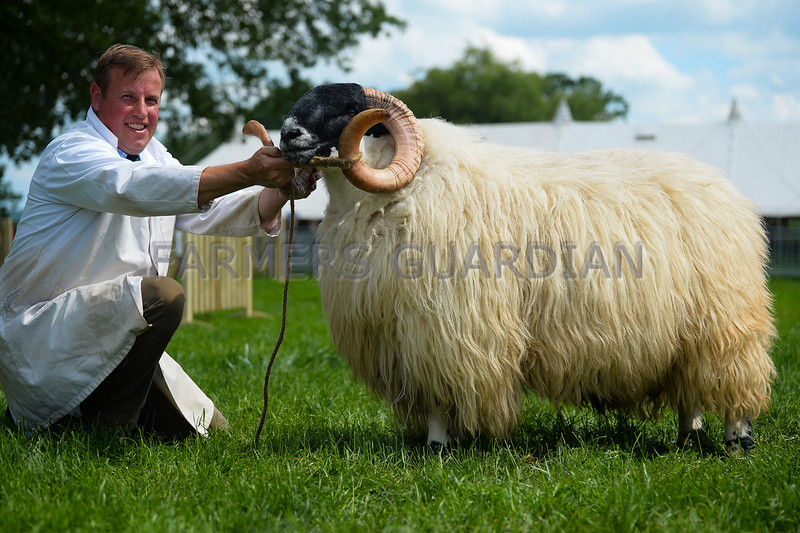 In the sheep inter-breed a Scottish Blackface ram from John Jordan and family took supreme.