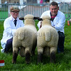 A pair of Hampshire Down ram lambs from D.C. Ritchie and E.A. Halcrow were placed reserve.
