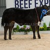 The reserve Baby Beef champion, Lady De Beut from E. and S. Layton.