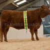 The South Devon champion, AI Z Eyton SAS Lolita 10 from C. W. Whitehead.