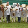 Champions at the Scottish Simmental Cattle Show held at Black Isle Show 16. L to R Judge Jennie Ahern from Southern Ireland Russell Drummond of Sponsors Zotis, John Barlow with the Champion seen with her Calf held by Rona Cameron, Douglas and Morag Smith Drumsleed Fordoun with the Reserve Champion. The Champion travelled from Lancashire.
