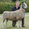 Bluefaced Leicester Champion at Black Isle Show 16. Ewe from M Seed & Son, Home Farm,Auchry, Cuminestown, Turriff.