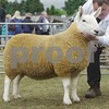 "North Country Cheviot ""Park"" at Black Isle Show 16. From John Polson, Smerlie, Lybster"