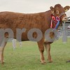 Limousine Cattle Champion at Black Isle Show 16 Heifer from R.Mitchell,Carron Mains Farm, Aberlour.