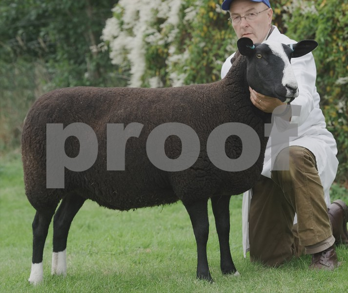Zwartble Champion at Black Isle Show 16 a Ewe from Jim Mair, Dunmore, Beauly.