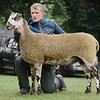 Blue Faced Leicester Champion at Braco Show from<br /> Graham, Burnbank.
