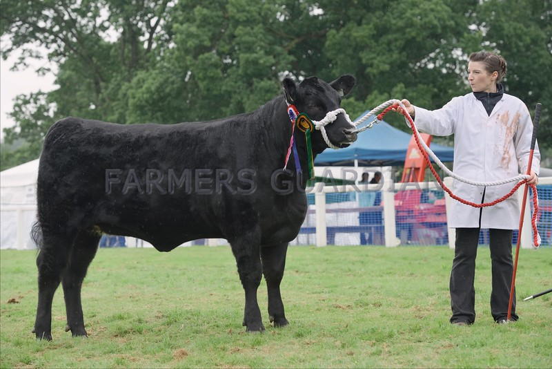 Aberdeen Angus Champion at Braco Show from Dick, Thorsk