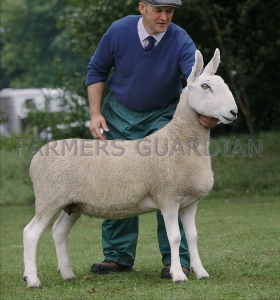Border Leicester champion at Braco Show from S&A Watson, Muthill, Crieff.
