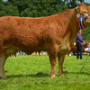 Reserve Inter-breed beef champion Limousin Dinmore Glorious from Mr P. Dawes.