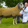 Inter-breed champion sheep a Blue Faced Leicester ram from R. Howartson.