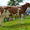 Dairy inter-breed champion from ?????