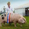 Inter-breed pig champion a Gloucester Old Spot breeding sow from Miss Sarah Whitley.