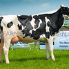 Reserve Inter-breed Dairy champion Riverdane Ex Rosabel from Riverdane Holsteins.
