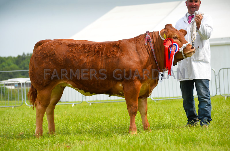 Commercial Beef champion Margo, from Mr Dickinson.