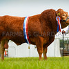 Inter-breed beef champion Limousin Bull Dinmore Lionheart from Mr Paul Dawes.