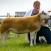 A Texel yearling ewe from Angela and Stan Nairey, Blackburn taking supreme champion.