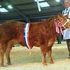 CSL Champion beef