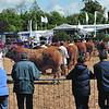 Devon County Show 16/17 May