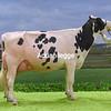 D Expo Holstein