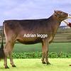 D Expo Heifer champ