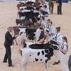 Dairy Expo015