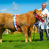 Inter-breed beef champion Heifer called Mini Me from Robin and Eleri Roberts.
