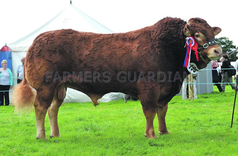 Denbigh Res Beef 7398
