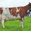Denbigh Dairy Res 7329