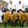 Denbigh Suffolk group