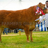Inter-breed beef reserve champion Limousin Heifer Trisant Jini from G and E Jones.