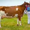 Dairy inter-breed champion Acton Bazzen Princess Pocker from the Huws family.
