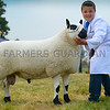 Hill breed champion a Kerry Hill yearling ram from Mr Tom Evans.