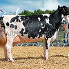 Holstein and dairy interbreed was Curscombe Windbrook Joy 89 from C.R.J. and J.A. Bishop.
