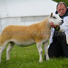 Sheep inter-breed went to a Texel yearling ewe from E.W. Quick and Sons