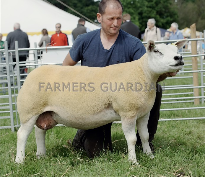 Texel Champion at Doune & Dunblane Show a one-crop ewe from Robert Cockburn, Hill of Errol, Perth.