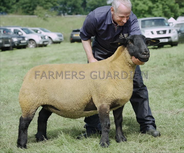 Suffolk and Sheep Interbreed Champion at Doune & Dunblane Show