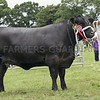 Aberdeen Angus Champion at Doune & Dunblane Show