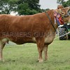 Limousin Cow Interbreed and overall show supreme champion at Doune & Dunblane Show. From D&L  Graham, Burnbank Farm, Blair Drummond.
