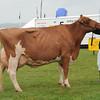 Dumfries Holstein