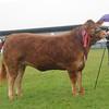 Dumfries Limousin