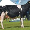 Inter-breed dairy champion Logan Sid Edie from  B. Yates.