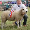 Echt Show 14. Sheep Young Handler Champion 12 yo Hugh Gordon, Clochahill, Stonehaven.
