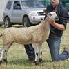 Echt Show 14. Bluefaced Leicester Champion a Ewe Lamb from David Cowie, South, Gariochsford.
