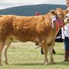 "Echt Show 14. Limousin Cattle Champion 'Emslies Leyrl"" from Aileen Ritchie, Tamala, Burnside, Whitecairns."